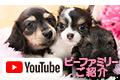 YouTubeビーファミリー